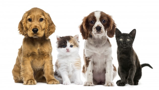 Group of kittens and dogs