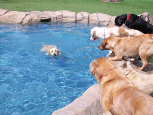 pool-dogs1